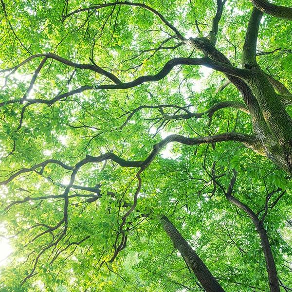 香りの成分には芳楠(ホウショウ)の木部から抽出したエッセンシャルオイルを使用しています。