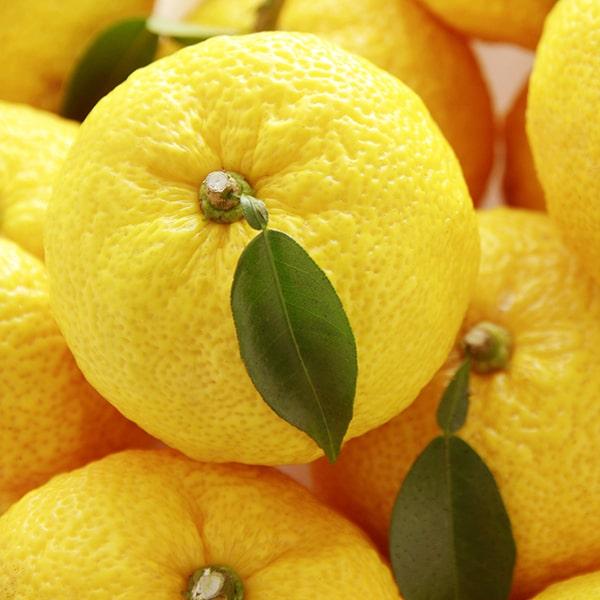 香りの成分には高知産の柚子から抽出したエッセンシャルオイルだけを使用しています。